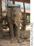 Слон (2015 год). Стоковое фото, фотограф Евгений Андреев / Фотобанк Лори
