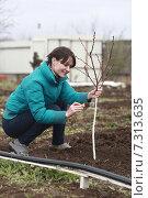 Девушка белит молодое дерево. Стоковое фото, фотограф Ivanikova Tatyana / Фотобанк Лори