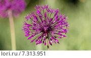 Цветок. Стоковое фото, фотограф Андрей Каретников / Фотобанк Лори