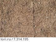 Купить «Сухая трава, фон», фото № 7314195, снято 30 марта 2015 г. (c) Кирилл Черезов / Фотобанк Лори