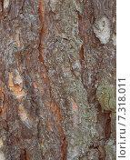 Текстура кора дерева. Стоковое фото, фотограф Сотникова Кристина / Фотобанк Лори