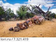 Купить «Большие секции окаменевшего дерева.  Escalante Petrified Forest State Park, Utah», фото № 7321419, снято 25 апреля 2015 г. (c) Ирина Кожемякина / Фотобанк Лори