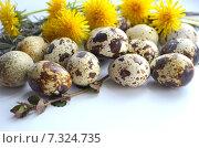 Перепелиные яйца. Стоковое фото, фотограф Юлия Москаленко / Фотобанк Лори