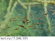 Купить «Croatia, Plitvicka Jezera, Plitvice Lakes National Park, Plitvice Lakes National Park», фото № 7346191, снято 18 декабря 2018 г. (c) BE&W Photo / Фотобанк Лори