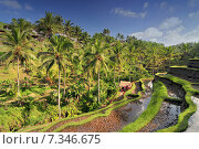 Купить «The most dramatic and spectacular rice terraces in Bali near the village of Tegallalang.», фото № 7346675, снято 17 декабря 2018 г. (c) BE&W Photo / Фотобанк Лори