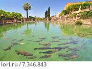 Fountain in the gardens of the alcazar de los Reyes Cristianos in Cordoba, Spain. Редакционное фото, агентство BE&W Photo / Фотобанк Лори