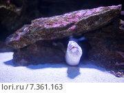 Купить «Sea snake swimming in a tank», фото № 7361163, снято 27 января 2015 г. (c) Wavebreak Media / Фотобанк Лори