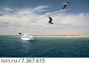 Красное море, Египет, риф, яхта, чайки в полете на переднем плане (2015 год). Редакционное фото, фотограф Лада Иванова / Фотобанк Лори