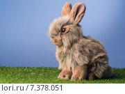 Купить «Grey bunny rabbit», фото № 7378051, снято 6 февраля 2015 г. (c) Wavebreak Media / Фотобанк Лори