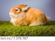 Купить «Ginger bunny rabbit», фото № 7378787, снято 6 февраля 2015 г. (c) Wavebreak Media / Фотобанк Лори