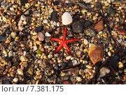 Красная морская звезда. Стоковое фото, фотограф eva cuba air / Фотобанк Лори