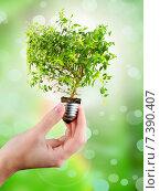 Купить «Чистая энергия. Концепт. Миниатюрное дерево в женских руках.», фото № 7390407, снято 18 сентября 2019 г. (c) Виталий Радунцев / Фотобанк Лори