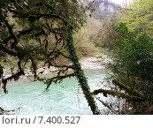 Купить «Природа Кавказского заповедника, Тисо-Самшитовая роща в Хосте», фото № 7400527, снято 28 марта 2014 г. (c) DiS / Фотобанк Лори