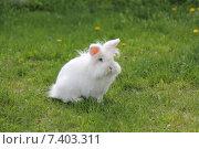 Белый кролик на зеленой траве. Стоковое фото, фотограф Александра Полупанова / Фотобанк Лори
