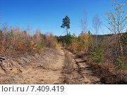 Купить «Дорога в осеннем  лесу. Забайкальский край», эксклюзивное фото № 7409419, снято 29 сентября 2007 г. (c) Александр Щепин / Фотобанк Лори
