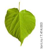 Купить «Зеленый лист на белом фоне», фото № 7414003, снято 29 апреля 2015 г. (c) Анна Полторацкая / Фотобанк Лори