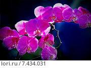 Купить «Орхидея», фото № 7434031, снято 11 марта 2008 г. (c) Татьяна Белова / Фотобанк Лори
