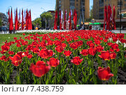 День Победы (2015 год). Стоковое фото, фотограф Андрей Соколов / Фотобанк Лори