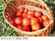 Сад и огород: томаты в корзинке. Стоковое фото, фотограф yaray / Фотобанк Лори