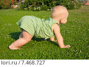 Ребенок ползает по траве. Стоковое фото, фотограф Maria Siurtukova / Фотобанк Лори