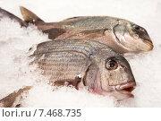 Свежая рыба на льду. Стоковое фото, фотограф Maria Siurtukova / Фотобанк Лори