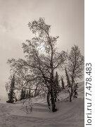 Дерево в инее. Стоковое фото, фотограф Дарья Швыдкая / Фотобанк Лори