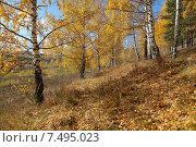 Осенняя пора. Осенний пейзаж. Стоковое фото, фотограф Виталий Горелов / Фотобанк Лори