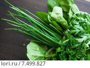 Свежая зелень: лук, мята, салат. Стоковое фото, фотограф Елена Титаренко / Фотобанк Лори