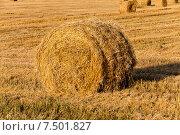 Рулон соломы на скошенном поле. Стоковое фото, фотограф Игорь Лейчонок / Фотобанк Лори