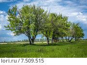 Цветущие деревья. Стоковое фото, фотограф Андрей Соколов / Фотобанк Лори