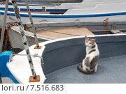 Кот в лодке у набережной Балаклавы (2014 год). Стоковое фото, фотограф Наталия Елсукова / Фотобанк Лори