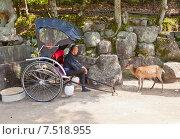 Рикша и пятнистый олень (Cervus nippon) на острове Ицукусима (Миядзима), Япония (2015 год). Редакционное фото, фотограф Иван Марчук / Фотобанк Лори