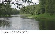 Купить «Лес.Река Паша», видеоролик № 7519911, снято 3 июня 2015 г. (c) Звездочка ясная / Фотобанк Лори