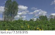 Купить «Летний день. Деревня. Одуванчики», видеоролик № 7519915, снято 3 июня 2015 г. (c) Звездочка ясная / Фотобанк Лори