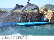 Купить «Анапский Утришский дельфинарий. Шоу морских млекопитающих», фото № 7525743, снято 6 июня 2015 г. (c) Игорь Архипов / Фотобанк Лори