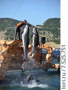 Купить «Анапский Утришский дельфинарий. Шоу морских млекопитающих», фото № 7525751, снято 6 июня 2015 г. (c) Игорь Архипов / Фотобанк Лори