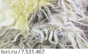 Купить «Искусственный мех», видеоролик № 7531467, снято 16 мая 2014 г. (c) Потийко Сергей / Фотобанк Лори