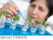 Женщина лаборант рассматривает проросшие зёрна в стаканчиках. Стоковое фото, фотограф Аnna Ivanova / Фотобанк Лори