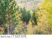 Купить «Осенний пейзаж. Забайкальский край», эксклюзивное фото № 7537575, снято 26 сентября 2007 г. (c) Александр Щепин / Фотобанк Лори