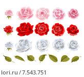 Набор роз с листьями на белом фоне. Стоковая иллюстрация, иллюстратор Миронова Анастасия / Фотобанк Лори