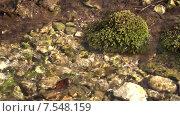 Купить «Кочка мха в ручье. Пущино», видеоролик № 7548159, снято 5 августа 2020 г. (c) Mike The / Фотобанк Лори