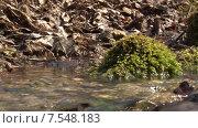 Купить «Мох, ручей, прошлогодние листья. Пущино», видеоролик № 7548183, снято 19 сентября 2018 г. (c) Mike The / Фотобанк Лори