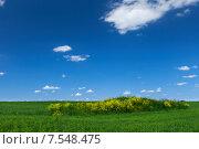 Купить «Зеленое поле и голубое небо», фото № 7548475, снято 13 июня 2015 г. (c) Барковский Семён / Фотобанк Лори