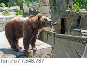 Купить «Бурый медведь в зоопарке», эксклюзивное фото № 7548787, снято 13 июня 2015 г. (c) Svet / Фотобанк Лори