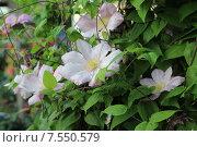 Розовые цветы. Стоковое фото, фотограф Анисенко Дина Васильевна / Фотобанк Лори