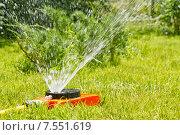 Купить «Полив зеленого газона на дачном участке», фото № 7551619, снято 14 июня 2015 г. (c) Сергей Сергеев / Фотобанк Лори