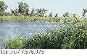 Купить «Трава на берегу реки», видеоролик № 7576975, снято 18 июня 2015 г. (c) Потийко Сергей / Фотобанк Лори
