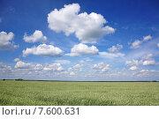 Живописное поле злаков. Стоковое фото, фотограф Андрей Силивончик / Фотобанк Лори