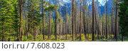 Йосемитский Национальный Парк, Калифорния, США. Стоковое фото, фотограф Станислав Мороз / Фотобанк Лори