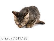 Маленький серый полосатый котенок на белом фоне. Стоковое фото, фотограф Владимир Ходатаев / Фотобанк Лори